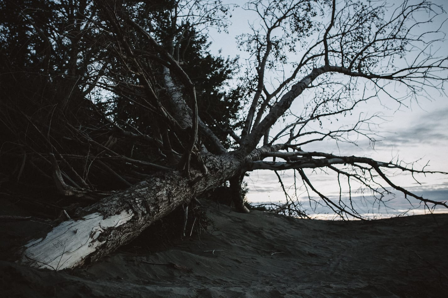 alaska-wedding-photographer-flattop-trail-31