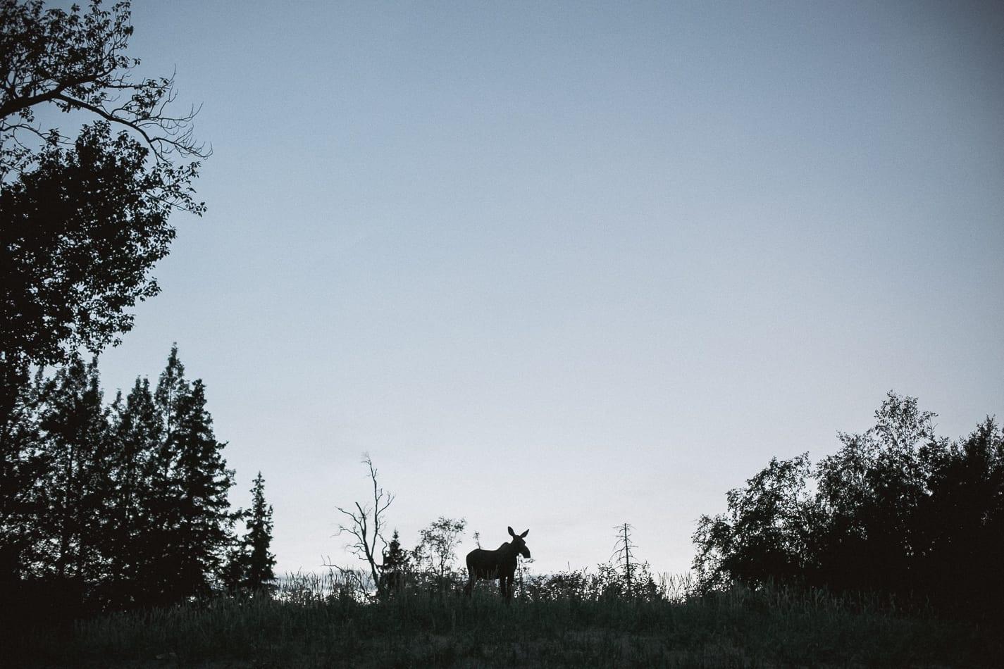 alaska-wedding-photographer-flattop-trail-32