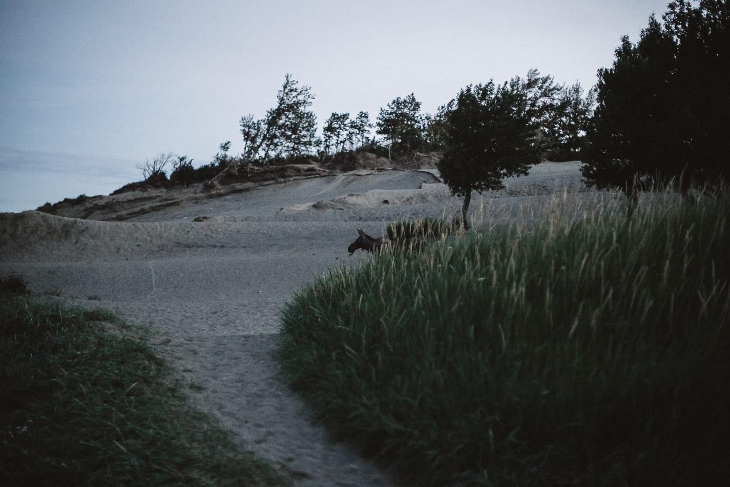 alaska-wedding-photographer-flattop-trail-33