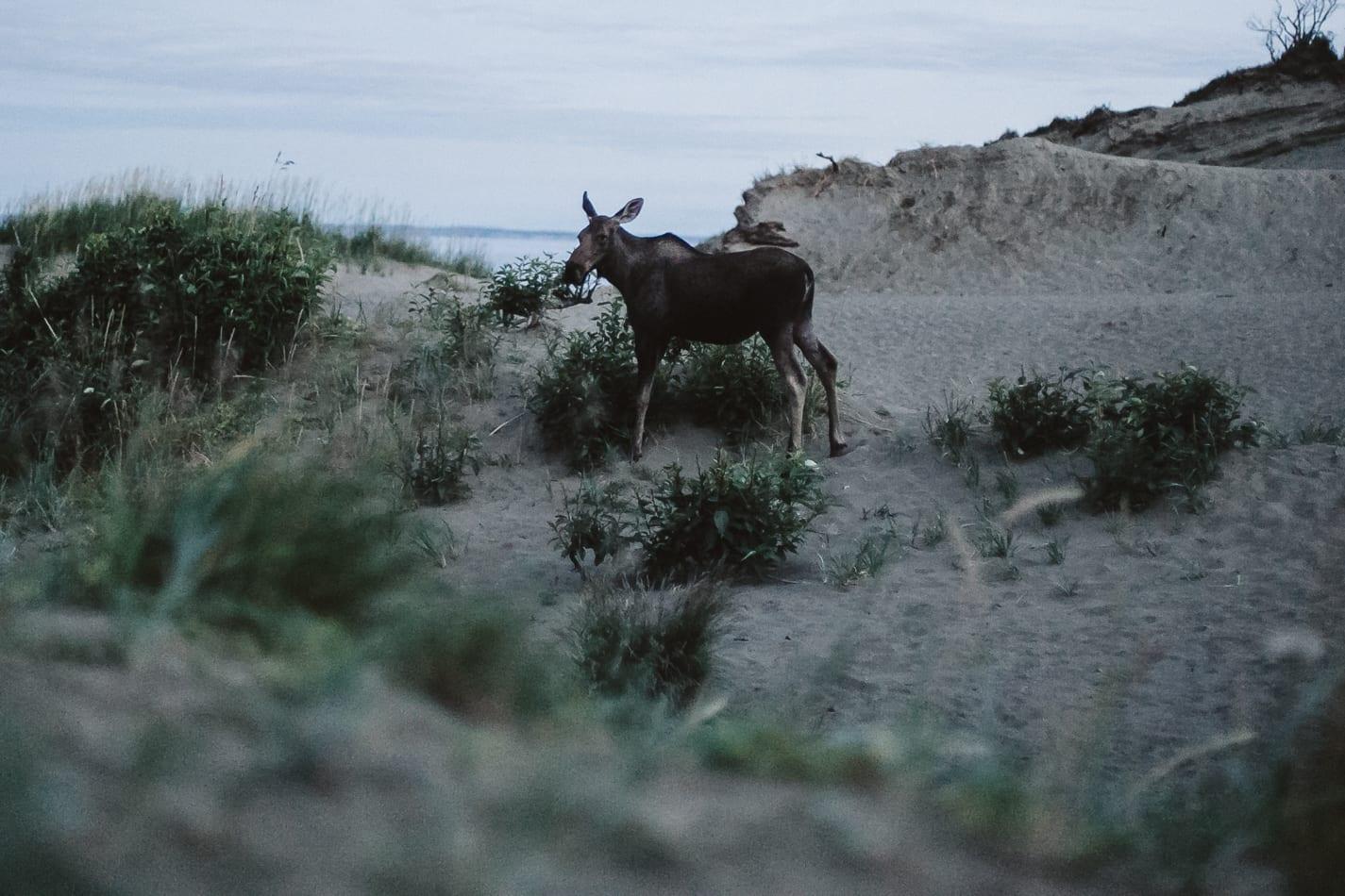 alaska-wedding-photographer-flattop-trail-35