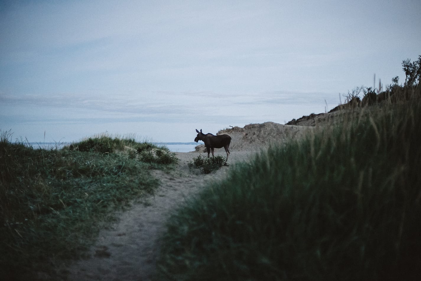 alaska-wedding-photographer-flattop-trail-34
